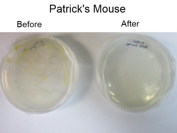 Patrick's mouse, before and after