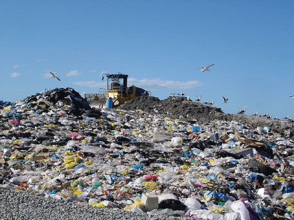 Yale Discovers a Fungus That Eats Plastic