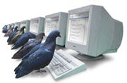 Google April Fools Pigeons