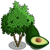 FarmVille avocado tree