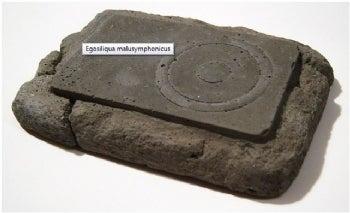 Egosiliqua malusymphonicus